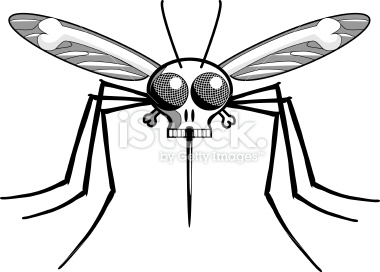Deaths Head Mosquito